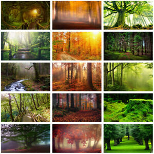 Forest Scenery Trees Photography Background Studio Photo Backdrop