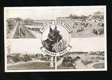 Dogs SCOTTISH TERRIER Sussex Bognor Regis 1947 M/view PPC
