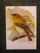POUILLOT SIFFLEUR DUNNOCK  illustration birds  carte postale postcard