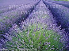 Echter Lavendel Heilpflanze Plante Aromatique Herbes 40 graines FRAIS