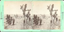CR Savage Stereoview of Arizona – Bayonet Cactus on the Desert 1870s Men  Rifles