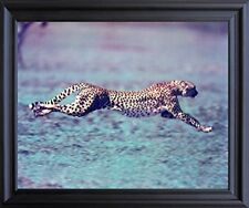 "Running Cheetah ""Spotted Wind"" Wildlife Animal Wall Decor Black Framed Picture"
