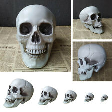 Multi Size Human Skull Head Decor Skeleton Coffee Bars Home Ornament Teach Toy