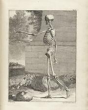 Articulated Walking Skeleton Halloween Engraving Creepy Real Canvas Art Print