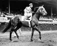 1955 Champion Racehorse NASHUA Glossy 8x10 Photo Print Eddie Arcaro Poster