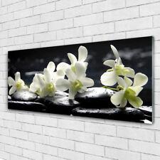 Glasbilder Wandbild Druck auf Glas 125x50 Blumen Steine Pflanzen