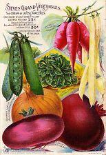 Barnard Seven Vintage Vegetable Seed Packet Catalogue Advertisement Poster