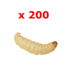 200 Waxworms Bulk Live Reptile Food Livefood waxworm Wax Worms