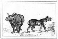 BORNEO / Rinocéros unicorne et Tigre
