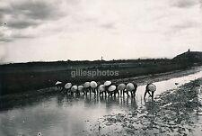 INDOCHINE c. 1940 - Rizière Repiquage - Div 1719