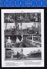 Hops Picking in England & the United States - 1950s Print