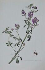 Ancienne Affiche Poster Art Print A3 Botanique Pl 77 Luzerne cultivée