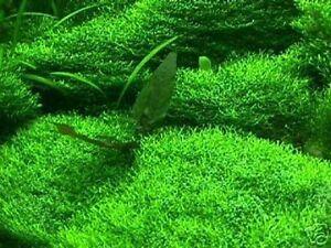 Ein Natur-Filter auf dem Teichboden Das Unterwassergras bewächst Folie & Steine