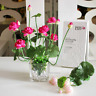 Artificial Silk Lotus Flower Home Decoration Leafs Green Plants House Decorative