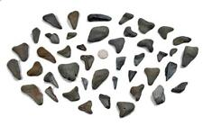 "Large Lot of 43 Prehistoric ""MEGALODON"" Sharks Tooth Teeth Florida Fossil"