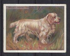 1915 OriginaL Uk Wardle Dog Art Study Wills Cigarette Card Clumber Spaniel