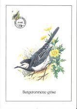 FDC 2474 - Oiseau Buzin sur gravure format A4 !