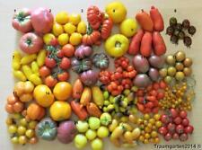 48 Tomatensamen Mischung aus 24 alte Sorten samenfeste Tomaten Saatgut