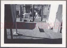Vintage Snapshot Photo Pet Goats Behind Chicken Wire 687686