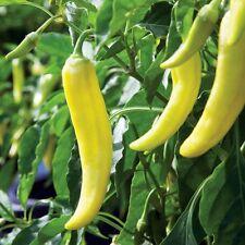 Organic yellow wax pepper BANANA CHILI -30 Hungarian Capsicum Annum Chilli Seeds