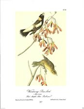 Wandering Rice-Bird Vintage Bird Print by John James Audubon ABONA219