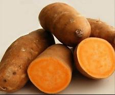 50PCS-RARE-Yellow-sweet-potato-seeds-Garden-seeds-jicama-sweet-potato-fruit  10