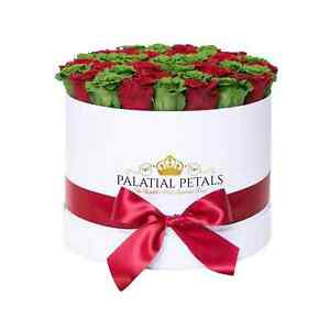 Red & Green Roses That Last A Year - Grande Rose Box