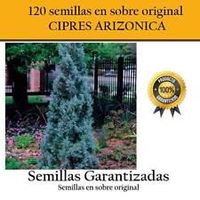 120 Graines de Cyprès Arizonica Pochette Original Garantiert