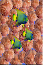 MADE IN SCOTLAND ANGEL FISH POSTCARD [FREE POSTAGE]