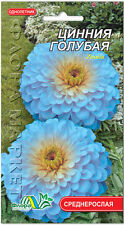 Zinnia haageana Blue Flower Seeds from Ukraine