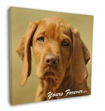 """Hungarian Visla 'Yours Forever' 12""""x12"""" Wall Art Canvas Decor, Pictu, AD-V2y-C12"""