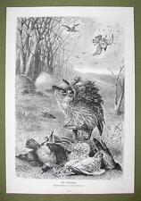 BIRDS Hunting Shooting from Camouflaged Shed - VICTORIAN Era Print