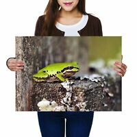A2 - Cute Green Frogs Nature Poster 59.4X42cm280gsm #8894
