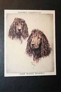 Irish Water Spaniel     Large Vintage Portrait Card   EXC