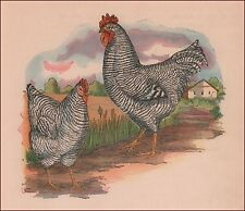 PLYMOUTH ROCK, Hen, Rooster, Chickens, vintage print, authentic 1923