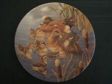 American Wigeon Duck Collector Plate Hide And Seek Joe Thornbrugh Waterfowl