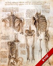 LEONARDO DA VINCI SKETCH PAINTING HUMAN SKELETON ANATOMY REAL CANVAS ART PRINT
