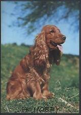 CPA Cocker Spaniel Dog Hund Pies Cane Perro Chiene z740