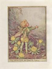 Flower Fairies: The Winter Aconite Fairy Vintage Print Cicely Mary Barker