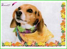 Image autocollant PANINI Bébés Animaux Calins N° 35 chiot chien dog