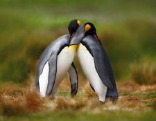 METAL FRIDGE MAGNET Two King Penguins Hugging Birds Travel Anarctica