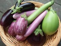 100PCs Eggplant Plants Seeds 20 Kinds Rare Organic Vegetables Viable Plant seeds