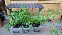 Herb/Small plant cultivator. Completely different. Wonderful. free stand or hang