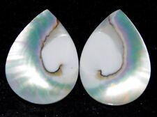 Loose Gemstone 21cts. Natural Nautilus Shell Cabochon  Lot 6423