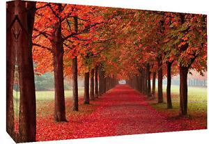 Autumn Trees Landscape Cotton Canvas Wall Art Picture Print- ALL SIZES