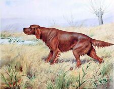 Irish Setter Hunting dog, 14 x11 Art Print
