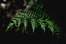 Photograph Of A Fern