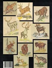 Designs by Gloria & Pat WILD ANIMALS OF NORTH AMERICA Book 10 Counted X Stitch