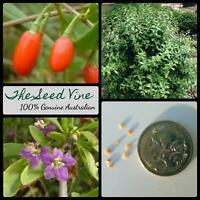 50+ ORGANIC GOJI BERRY SEEDS (Lycium chinense) Red Edible Super Food Wolfberry