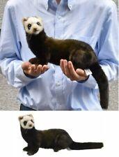Life Size Standing European Polecat Stuffed Animals 7827 HANSA Japan Tracking